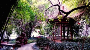 Some scenery on the campus of Yunnan University (also called YunDa)