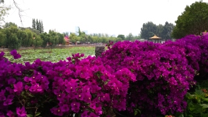 "At 大观公园 (""Daguan Gongyuan""), one of Kunming's bigger parks"