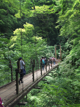 Students crossing the suspension bridge on TUJ students on Mt. Takao in Hachiōji, Tokyo, Japan.
