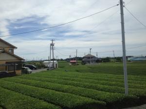 Shizuoka Green Tea Farm