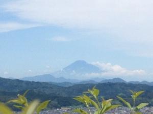 Mt. Fuji seen from the farm's Japanese tea garden.