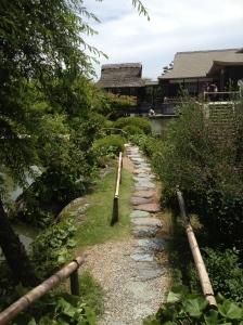 Pathway in the tea garden.