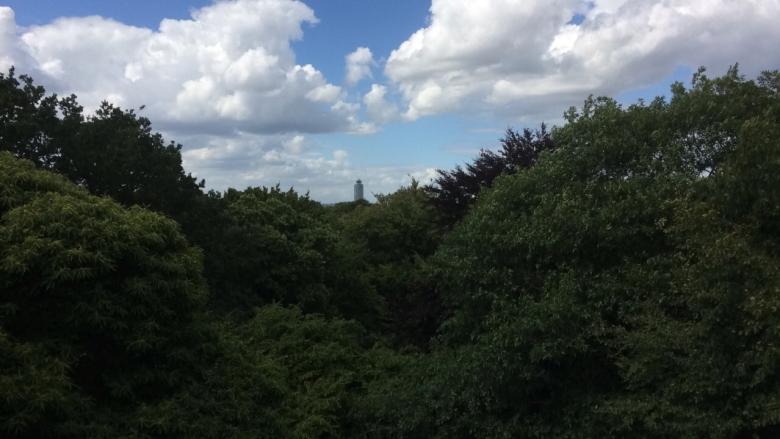 Treetop View.jpg