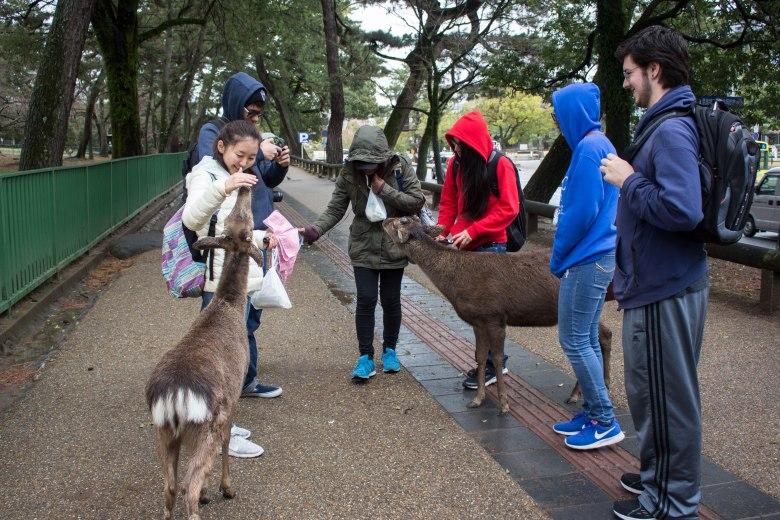 SP18103_Nara_Students interact with deer_KaylaAmador